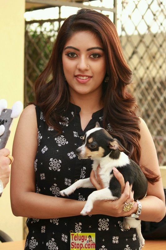 Anu Emmanuel Pics-Anu Emmanuel Pics--Telugu Actress Hot Photos Anu Emmanuel Pics-