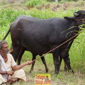buddareddi-palli-breaking-news-movie-working-stills09