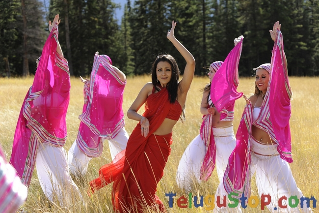 Trisha latest stills 2- Photos,Spicy Hot Pics,Images,High Resolution WallPapers Download