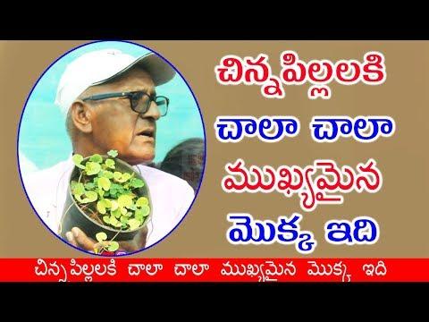 పరీక్షల సమయంలో జ్ఞాపకశక్తిని పెంచే ముఖ్యమైన మొక్క ఇది-Telugu Trending Viral Videos-Telugu Tollywood Photo Image