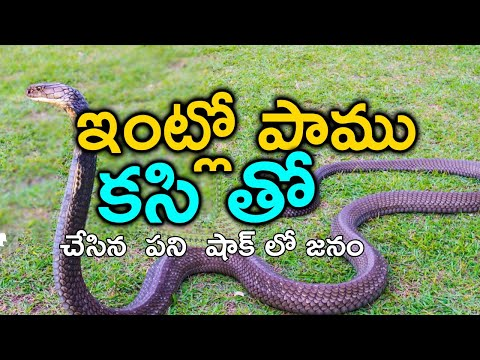 TeluguStop.com - ఇంట్లో కి పాము దూరిందని కసితో చంపి ఆ తర్వాత Snake Meat In Tamilnadu Viral Video-Telugu Trending Viral Videos-Telugu Tollywood Photo Image