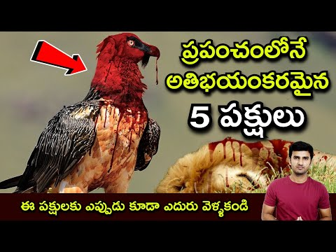 5 Deadliest Birds On The Planet Telu-5 Deadliest Birds On The Planet ప్రపంచంలోనే అతిభయంకరమైన 5 పక్షులు-Telugu Trending Viral Videos-Telugu Tollywood Photo Image-TeluguStop.com