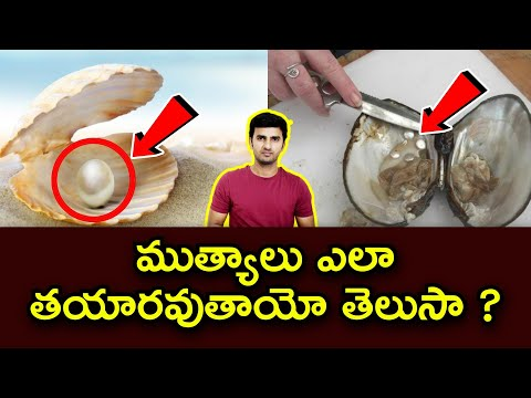 Top Interesting Facts In Telugu | Unknown And Amazing Facts| TeluguStop |-Top Interesting Facts In Telugu Unknown And Amazing Facts TeluguStop -Telugu Trending Viral Videos-Telugu Tollywood Photo Image-TeluguStop.com