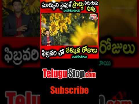 Why Sunflower (Poddu Tirugudu ) Turns Towards Sun Why Only 28 Days In Feb Leap Telugu Facts-Telugu Trending Viral Videos-Telugu Tollywood Photo Image-TeluguStop.com