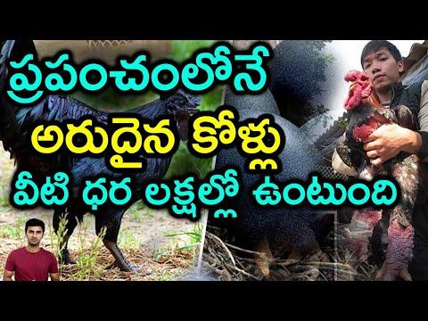 Top 5 Rarest Chicken Breeds In The World |Telugu Facts-Top 5 Rarest Chicken Breeds In The World Telugu Facts-Telugu Trending Viral Videos-Telugu Tollywood Photo Image-TeluguStop.com