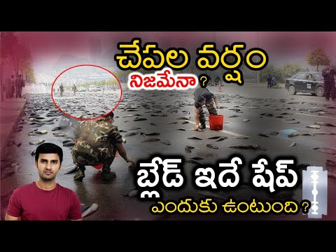 What Is The Reason Behind Fish Rains? | Why Can't We See The Air ? | Telugu Facts|-What Is The Reason Behind Fish Rains Why Can't We See The Air Telugu Facts-Telugu Trending Viral Videos-Telugu Tollywood Photo Image-TeluguStop.com
