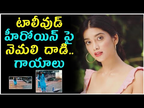 Digangana Suryavanshi Attacked By Peacock || Digangana Suryavanshi || Telugu Stop-Digangana Suryavanshi Attacked By Peacock Digangana Suryavanshi Telugu Stop-Telugu Trending Viral Videos-Telugu Tollywood Photo Image-TeluguStop.com