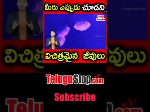 Strange Transparent Animals In The World In Telugu Telugu Facts -Telugu Trending Viral Videos-Telugu Tollywood Photo Image-TeluguStop.com