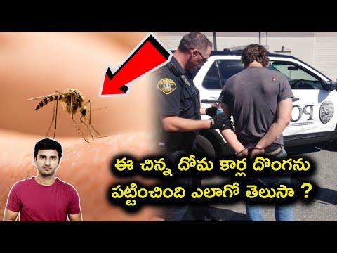 Mosquito Helps Police In Stolen Car Investigation In Telugu | Telugu Facts |-Mosquito Helps Police In Stolen Car Investigation In Telugu Telugu Facts -Telugu Trending Viral Videos-Telugu Tollywood Photo Image-TeluguStop.com