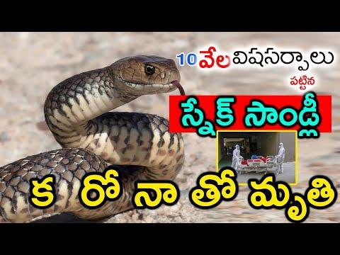Snake Stanley Died With Corona 10 Telugu Ful-TeluguStop.com