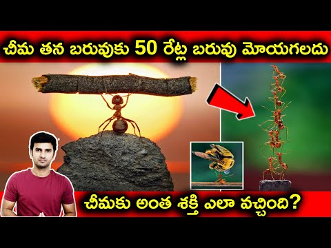 How Ant Can Lift 50 Time More Weight |Telugu Facts|-How Ant Can Lift 50 Time More Weight Telugu Facts-Telugu Trending Viral Videos-Telugu Tollywood Photo Image-TeluguStop.com