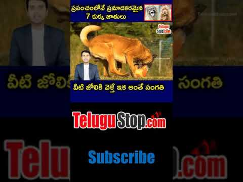 Top 7 Dangerous Dog Breeds In The World Telugu Facts-Telugu Trending Viral Videos-Telugu Tollywood Photo Image-TeluguStop.com