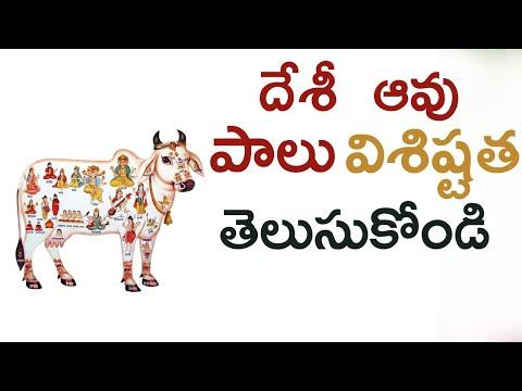 Benefits Of Desi Cow Milk   Desi Cow Ghee Benefits   Desi దేశీ ఆవు పాలు విశిష్టత తెలుసుకోండి-TeluguStop.com