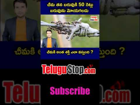 How Ant Can Lift 50 Time More Weight  telugu Facts -TeluguStop.com
