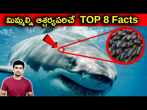 Technologies Which Human Copied From Nature |telugu Facts |-TeluguStop.com