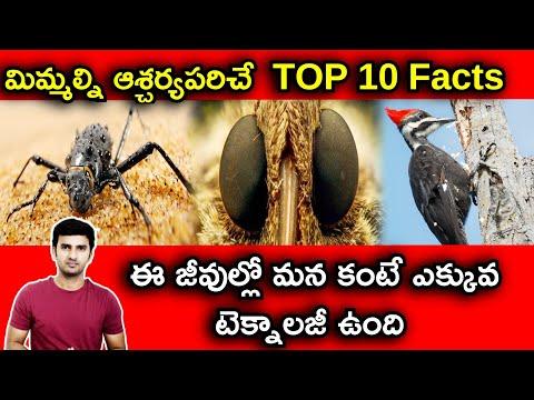 Top 10 Interesting Facts In Telugu  telugu Facts  -TeluguStop.com