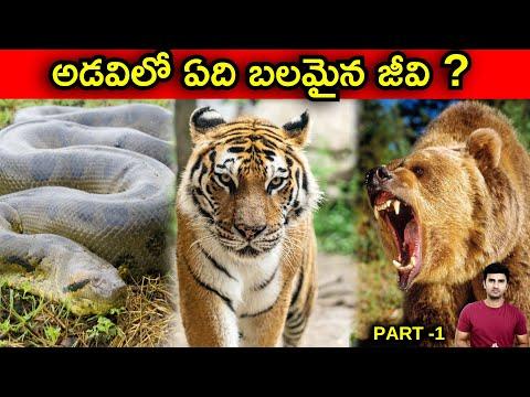 Strongest Animal In The World Explained In Telugu  telugu Facts  -TeluguStop.com