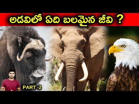 Strongest Animal In The World Explained In Telugu |telugu Facts | Part -2|-TeluguStop.com