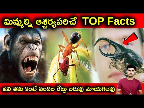 Interesting Facts About Animals Explained In Telugu  telugu Facts  -TeluguStop.com