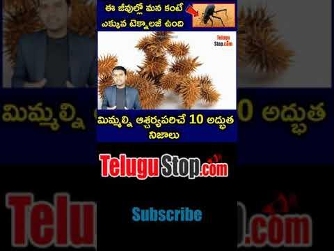 Top 10 Interesting Facts In Telugu |telugu Facts |ఈ జీవుల్లో మన కంటే ఎక్కువ టెక్నాలజీ ఉంది …-TeluguStop.com