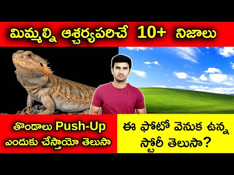 Top Interesting Facts In Telugu | తొండలు Push-ups ఎందుకు చేస్తాయో తెలుసా | Telugu Facts-TeluguStop.com