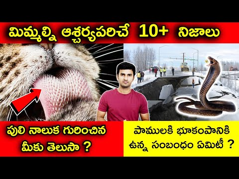 Top Unknown Interesting Facts In Telugu |పాములకి భూకంపానికి ఉన్న సంబంధం ఏమిటీ ? |telugu Facts-TeluguStop.com