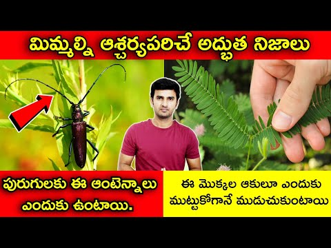 Interesting Facts In Telugu |పురుగులకు ఈ ఆంటెన్నాలు ఎందుకు ఉంటాయి |telugu Facts |-TeluguStop.com
