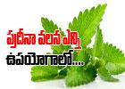 Healthy Benefits Of Mint---