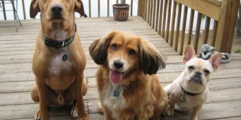 Divorced couple moves to court for 3 dogs in Canada Cour
