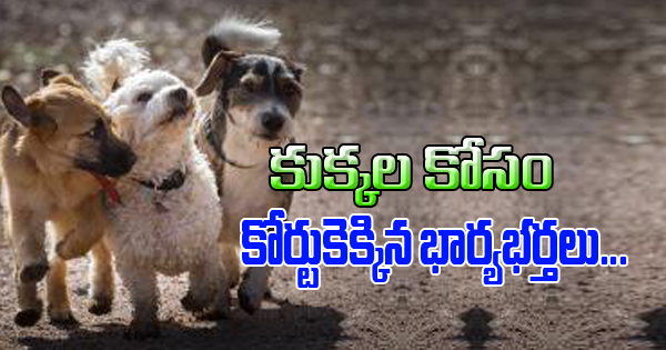 Divorced Couple Moves To Court For 3 Dogs In Canada Like Children కుక్కల కోసం కోర్టుకెక్కిన భార్యభర్తలు Photo,Image,Pics-