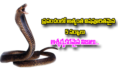 5 Most Poisonous Snakes In The World And Some Facts---