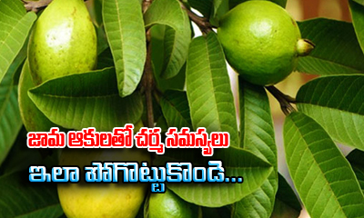 How To Get Rid Of Skin Problems With Guava Leaves---