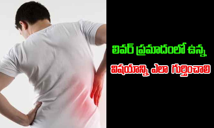 Signs In A Body That Speak About Liver Damage- Telugu