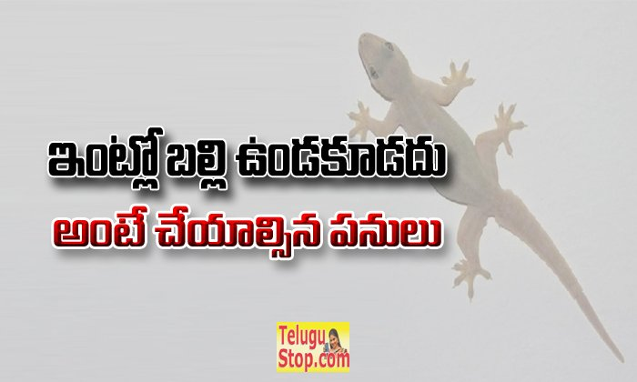 How To Get Rid Of Lizards At Home? Useful Tips--How To Get Rid Of Lizards At Home? Useful Tips-