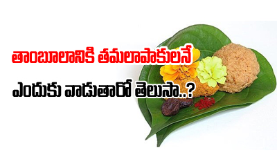 The Significance Of Thamboolam Betel Leafs--The Significance Of Thamboolam Betel Leafs-