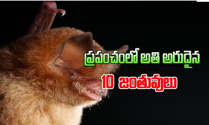 ప్రపంచంలో అతి అరుదైన 10 జంతువులు
