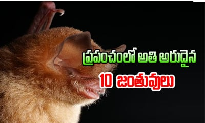 Top 10 Omg Rare Animals In The World- Telugu Viral News Top 10 Omg Rare Animals In The World--Top 10 OMG Rare Animals In The World-