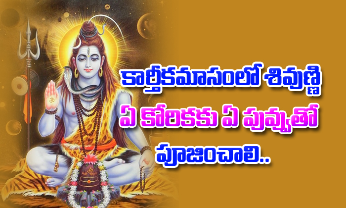 Archana To Shiva With Flowers