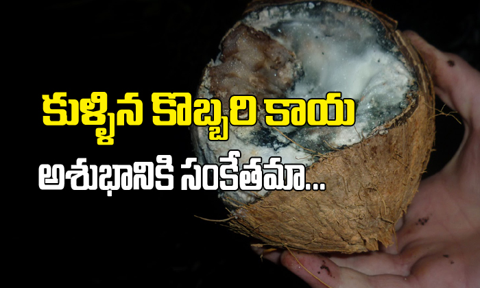 Spoiled Coconut in puja …Is it a bad sign??-