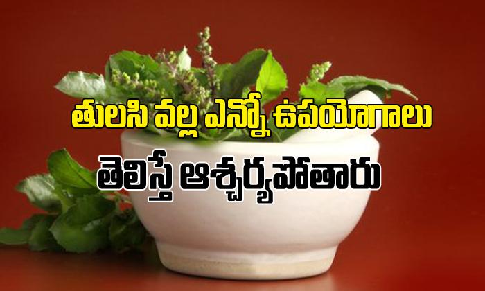Tulasi Leaves Uses And Health Benefits In Telugu- Telugu