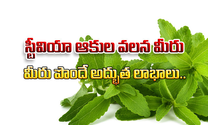Amazing benefits of Stevia leaves-