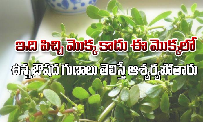 Ganga Payala Aaku Uses And Health Benefits- Telugu