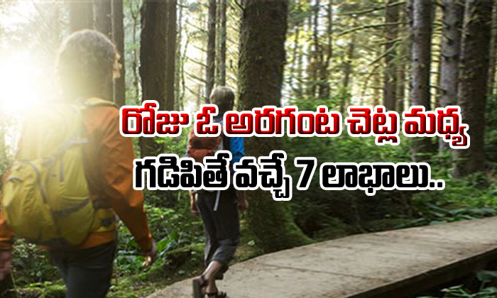 7 Benefits Of Spending Time With Trees Everyday- Telugu