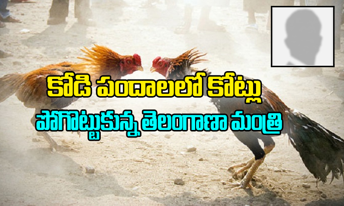 Telangana Minister loss 10cr in AP cock fights-