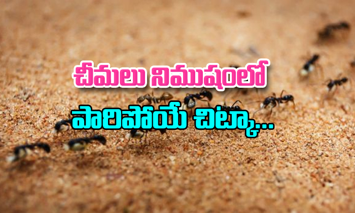 How To Get Rid Of Ant At Home- Telugu