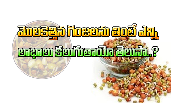 Health Benefits of Sprouts Telugu-
