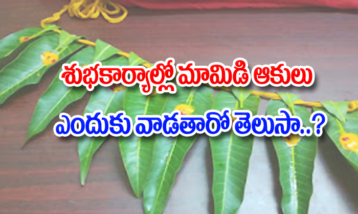 Mango Leaves Spiritual Significance--Mango Leaves Spiritual Significance-