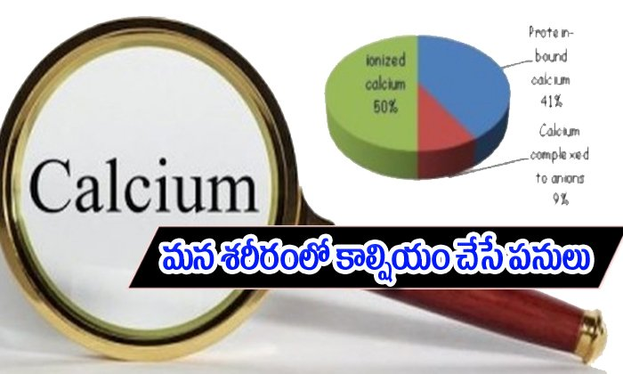 The Role Of Calcium In The Human Body--