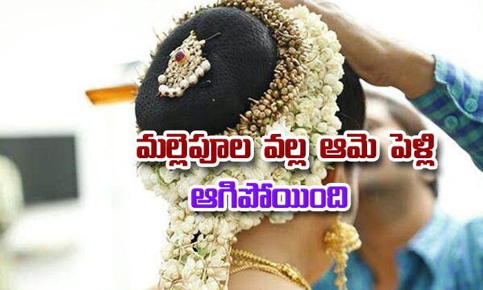 Jasmine Flower Stopped Marriage--Jasmine Flower Stopped Marriage-