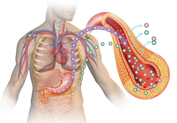 Diabetes Can Cause Damage Body Organs-